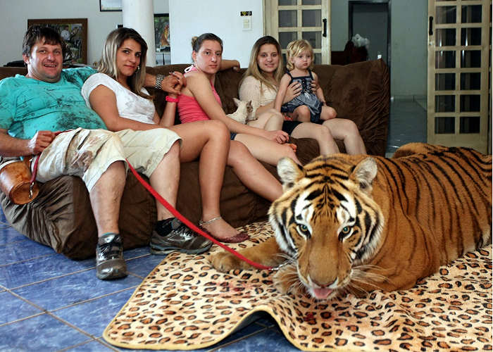 Watch This Family Living With Pet Tigers