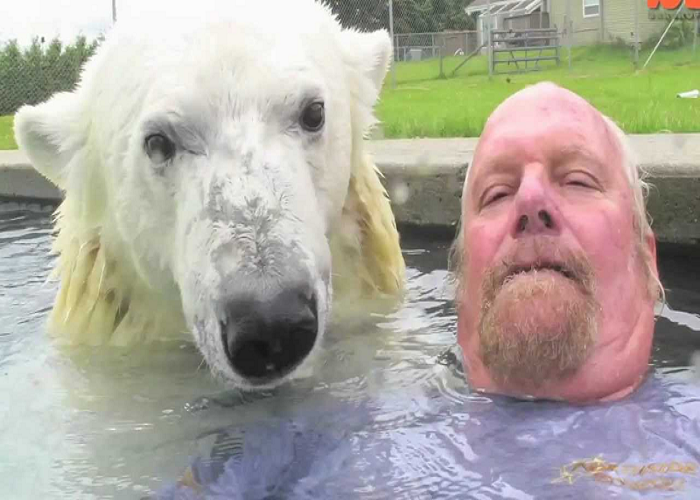 Watch This Man Who Can Swim With A Polar Bear
