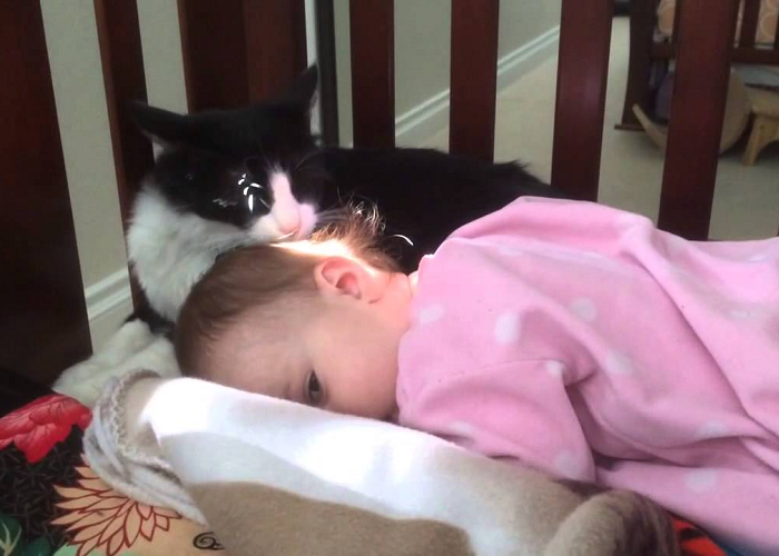 See How This Kitty Cleans The Cute Toddler