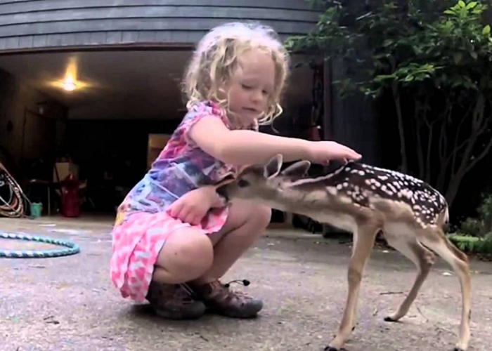 Watch How The Fawn Reacts To The Girl