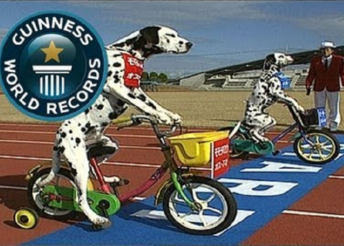 See These Two Funny Dogs Riding Tricycles