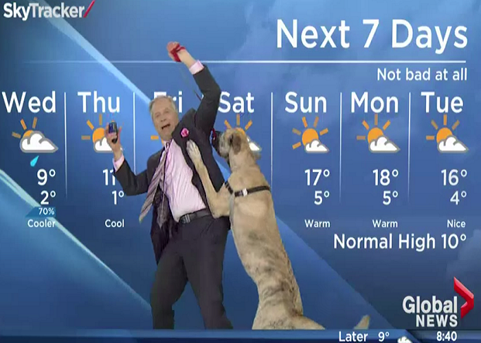 This Dog Steals The Show From Weatherman During The Weather Forecast