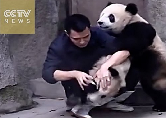 These Two Cute Pandas Don't Want To Take Their Medicine