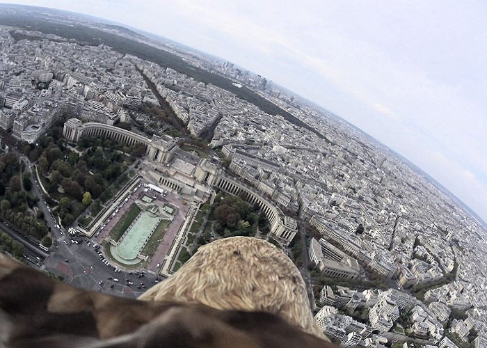 See How Paris Looks Like From The Back Of An Eagle