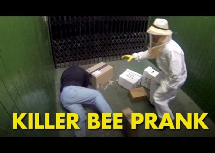Watch This Killer Bee Prank