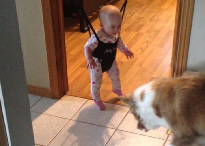See The Dog Teaching Baby To Jump