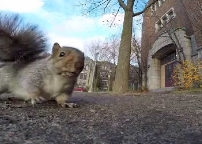 This Squirrel Steals The GoPro Camera And Carries It Up A Tree