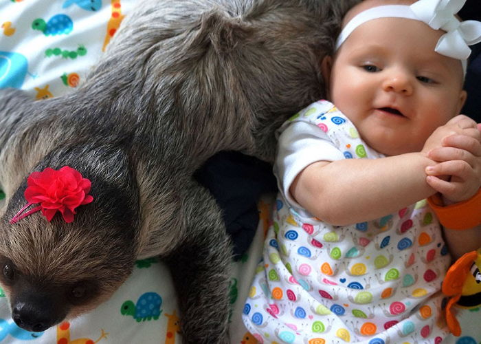 This Is An Adorable Friendship Between A Baby And A Sloth