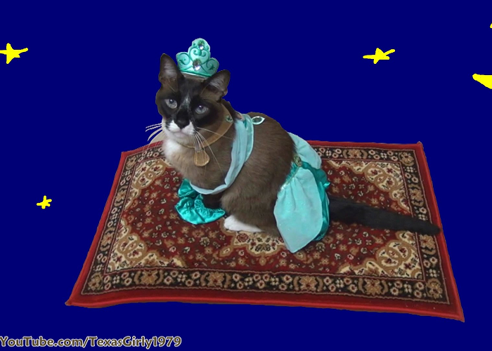 Look At This Cat Riding Magic Flying Carpet