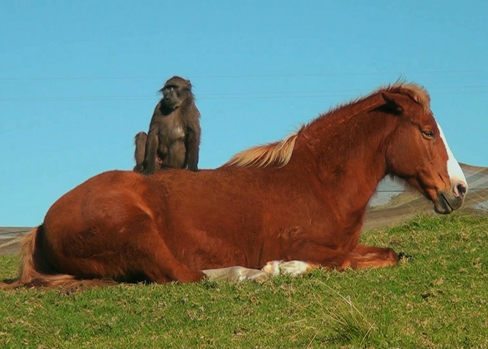 This Is An Awesome Friendship Between Horse And Baboon