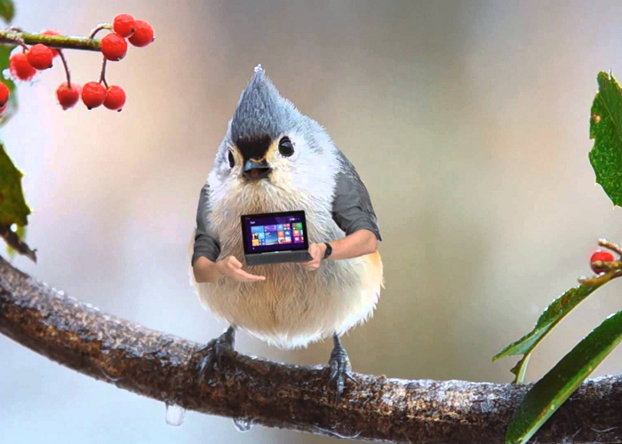 See The World's Most Modern Bird - ASUS T100 Commercial