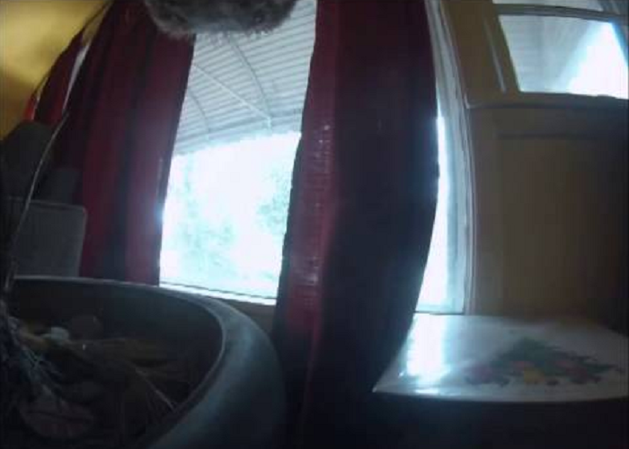 A Guy Attaches GoPro To See What His Dog Does When He Leaves