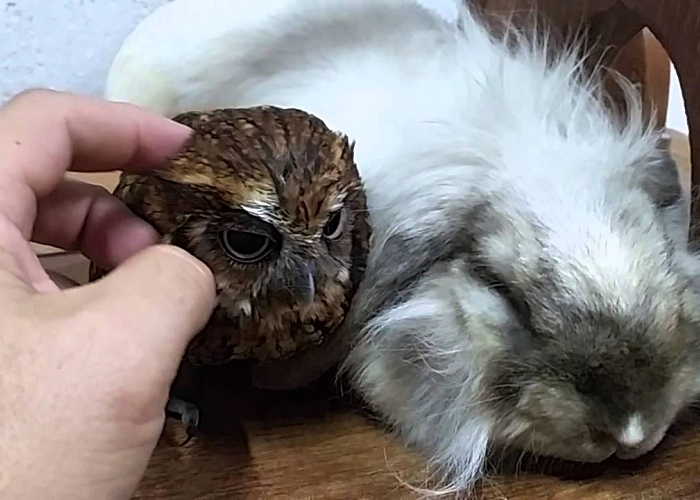 Owl And Bunny Take A Nap Together Like Two Old Friends