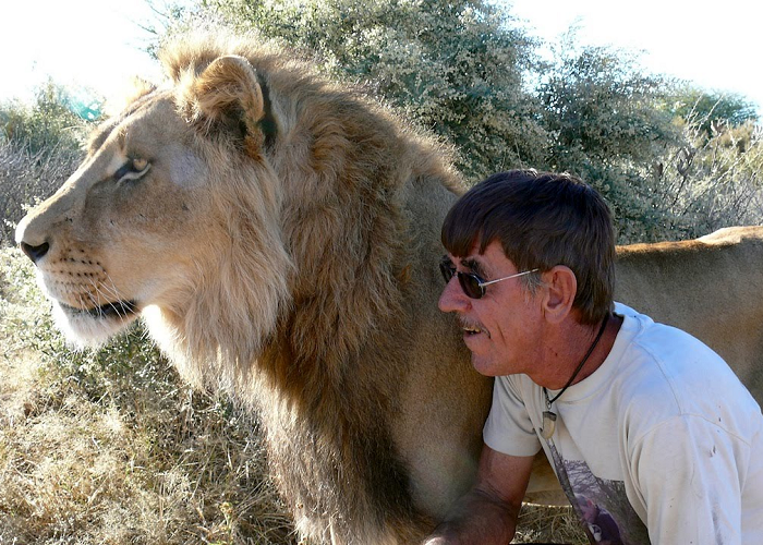 This Man Cuddles And Kisses A Huge Pet Lion