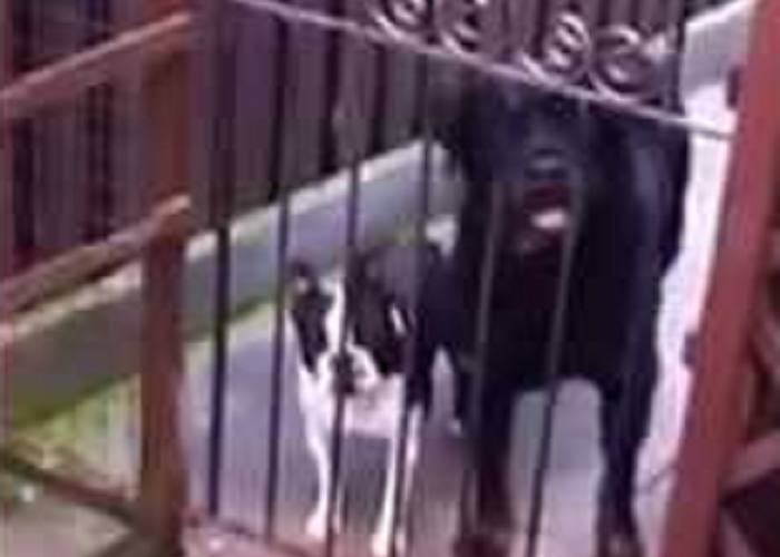 Is This Dog Saying Hello To People?!