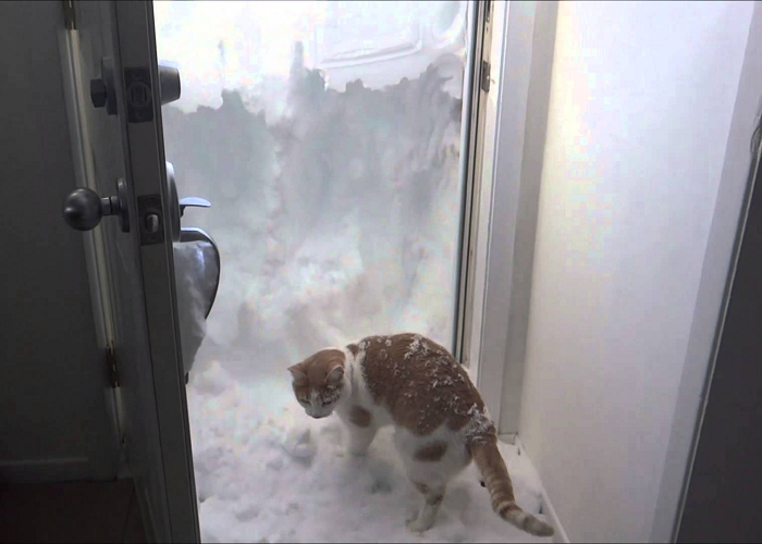 This Cat Is Really Trying To Deal With The Four Foot Snow Drift