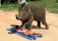 The Lady Gets Massage From A Cute Baby Elephant In Thailand