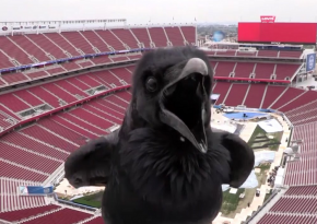 This Surprise Visitor Stops By The Stadium Series Webcam
