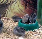 What This Funny Hamster Does Will Make You Laugh So Hard